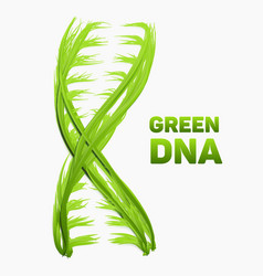 Abstract dna strand as green grass vector