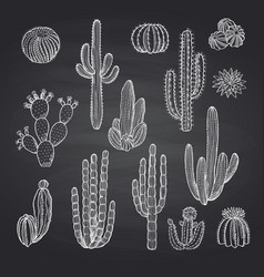 cacti plants set on chalkboard vector image