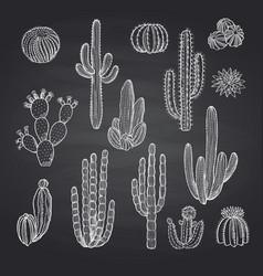 Cacti plants set on chalkboard vector
