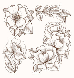 Flowers hand drawing set vector