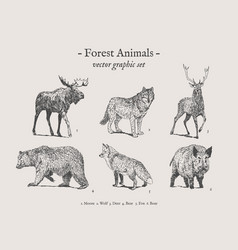 forest animals vintage set vector image
