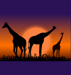 Giraffes back silhouettes in sunset vector