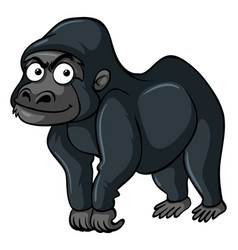 gorilla with black fur vector image