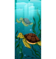 Two turtles swimming under the sea vector