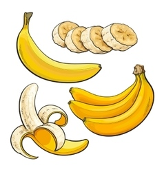 Sliced peeled singl and bunch of three ripe vector image