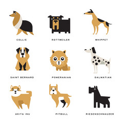collection of different dogs breeds characters and vector image