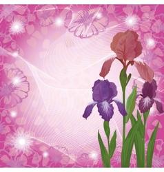 Flowers iris and ipomoea contours vector image vector image