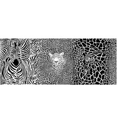 background with zebra leopard and giraffe vector image