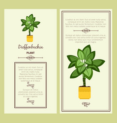 greeting card with dieffenbachia plant vector image