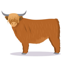 Highland cattle cow vector