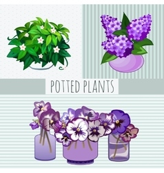 Purple flowers in pots potted plants vector image