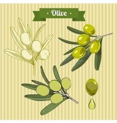 Set of green olives 2 vector image