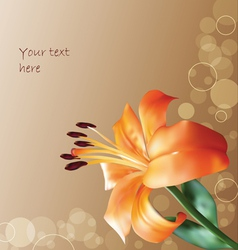 orange lilly on abstract background vector image