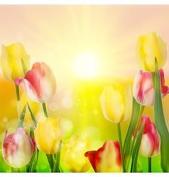 Beautiful bouquet of tulips EPS 10 vector image