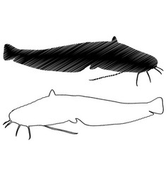 catfish silhouette vector image
