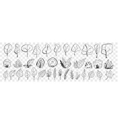 leaves from trees and plants doodle set vector image