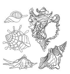 Sea shells icon vector