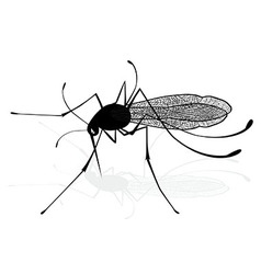 Insect a realistic gnat mosquito Mosquito vector