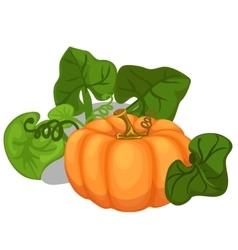 Big ripe pumpkin with leaves vegetable vector image