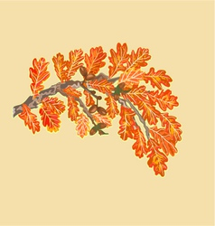 Branch of oak with leaves and acorns autumn theme vector image