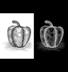 bell pepper grunge sketch on vector image