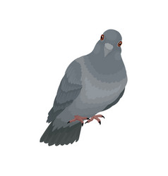 cute grey urban pigeon on a vector image