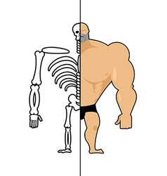 Human structure Skeleton men construction of vector