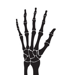 skeleton hand with bones isolated on white vector image