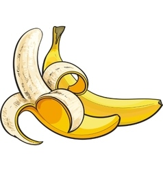 Two ripe bananas one open another unopened and vector image vector image
