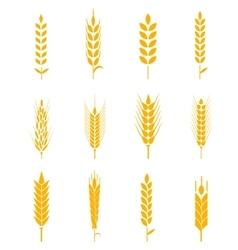 Ears of wheat bread symbols vector