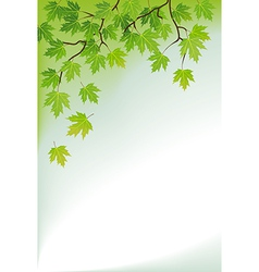 a branch of maple vector image