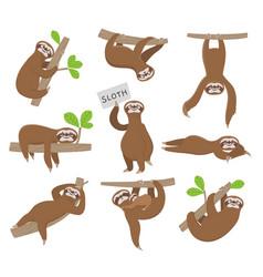 sloth cute baanimal sloths hanging on tree vector image