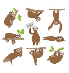 sloth cute baby animal sloths hanging on tree vector image