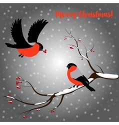 Bullfinch on rowan branch snow merry christmas vector image