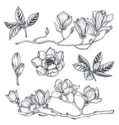 collection hand drawn magnolia flowers vector image