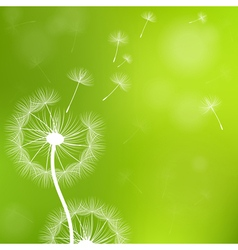 Dandelion with Seeds vector image vector image