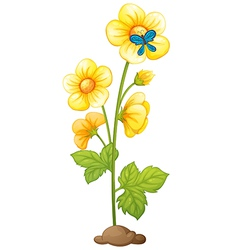 A yellow flower and a blue butterfly vector image vector image