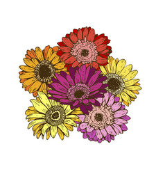 bouquet of daisies flower on white background vector image