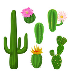cacti plant set vector image