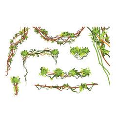 jungle vine branches cartoon hanging liana plants vector image