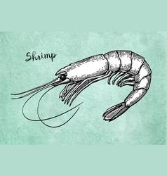 Shrimp ink sketch on old paper vector