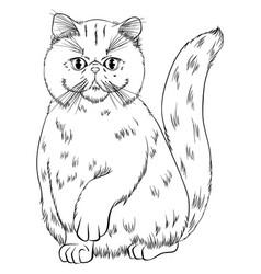 Sitting cat breed exotic shorthair line art vector