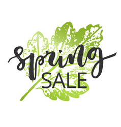 spring sale hand written inscription vector image