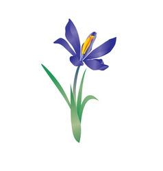 Vector violet flowe spring crocus vector