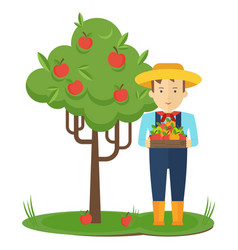 apple picking farmer man in the garden with boxes vector image