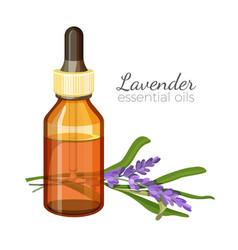Lavender essential oil in glass bottle with vector