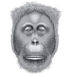 A head of an orangutan vector