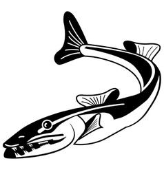 Baracuda vector