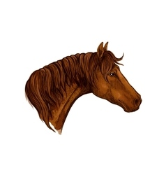 Brown graceful horse portrait vector image