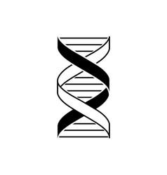 Dna strand double helix segment vector